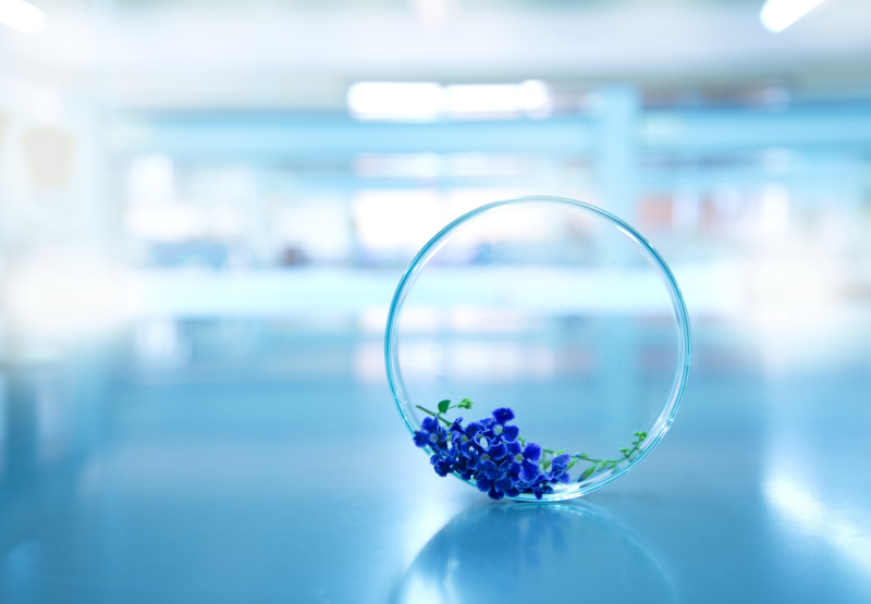 Image for Private Label Skincare Manufacturer Cosmetic Solution's Focused Training and Education Section. This image features a Petri-Dish on it's side in a laboratory setting. Inside the petri-dish is a raw material ingredient for a skin care formulation.